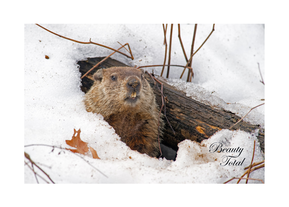 The Groundhog Is Predicting An Early Spring!